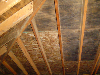 Black Mold (residential attic) & Black Mold - Residential